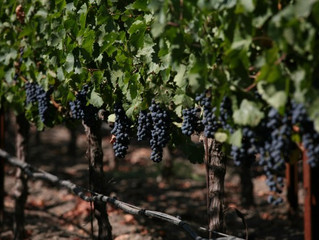 Inside F&B: Authority of Food & Beverage article EAT HERE NOW: CALIFORNIA WINE COUNTRY