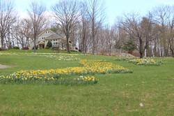 daffodills 2014 153.JPG