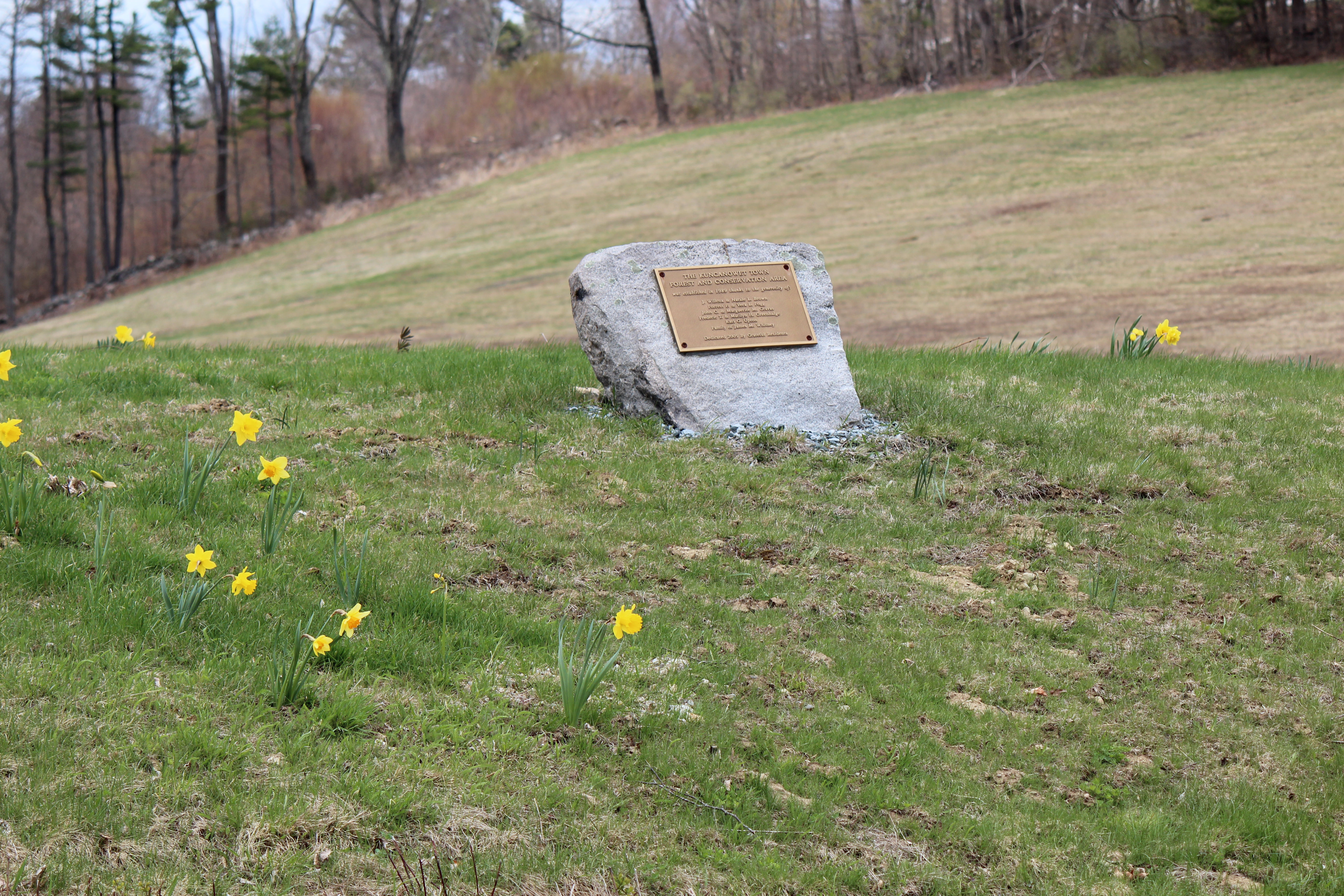daffodills 2014 163.JPG