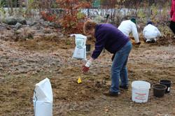 public planting 2011 (1).JPG