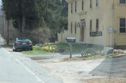 daffodills 2014 023.JPG