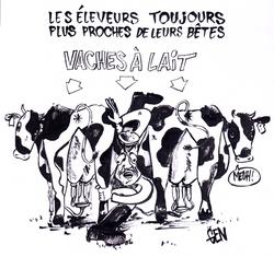 vaches à lait