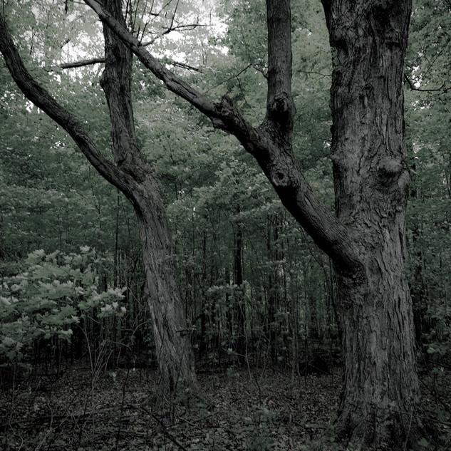 thwoodentwins.jpg