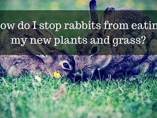 Ask a Gardener - Rabbits in my Garden