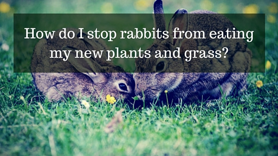 how to get rid of rabbits in gardens