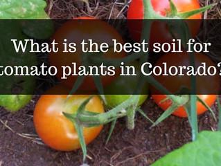Ask a Gardener - Tomato Soil