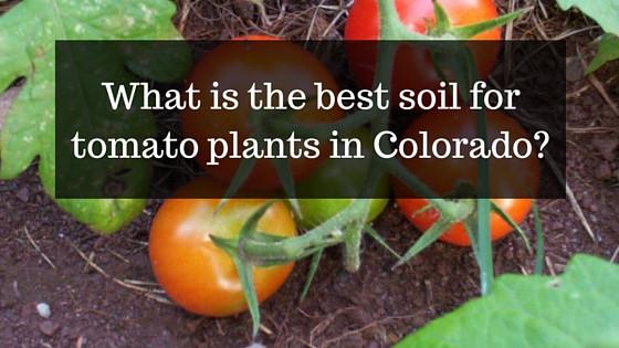 tomato soil