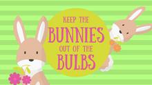 Keep the Bunnies Out of the Bulbs