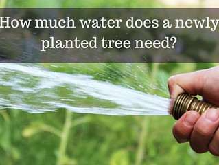 Ask a Gardener - Watering New Trees