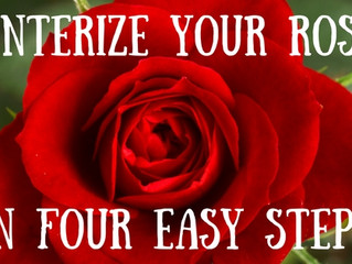 Winterize Your Roses in Four Easy Steps