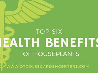 Top Six Health Benefits of Houseplants