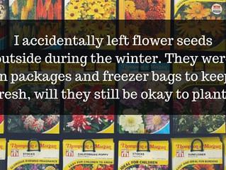 Ask a Gardener - Frozen Flower Seeds