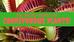 The Weird World of Carnivorous Plants!