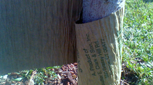 Sunscald & Tree Wrap