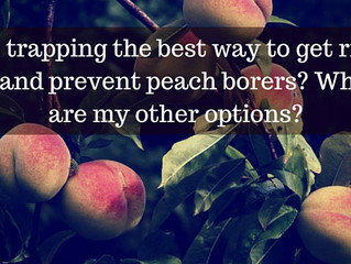 Ask a Gardener - Peach Borer