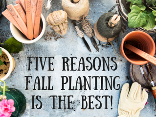 Five Reasons Fall Planting is the Best!