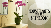 Houseplants for the Bathroom