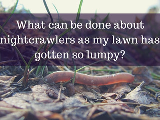 Ask a Gardener - Nightcrawlers and Earthworms