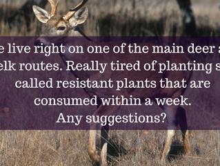 Ask A Gardener - Repelling Deer