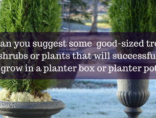 Ask A Gardener - Trees and Shrubs for Containers