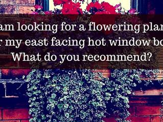 Ask a Gardener - Window Box