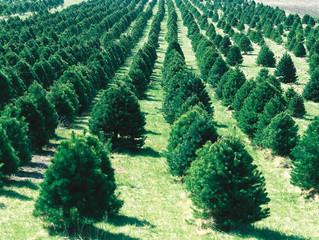 This Christmas, Go Au Naturel!