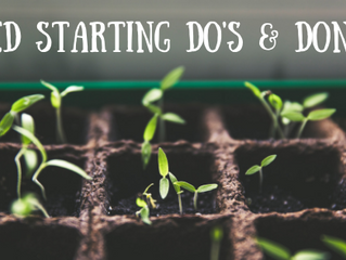 Seed Starting Do's & Don'ts