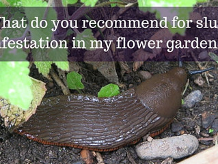 Ask a Gardener - Slugs