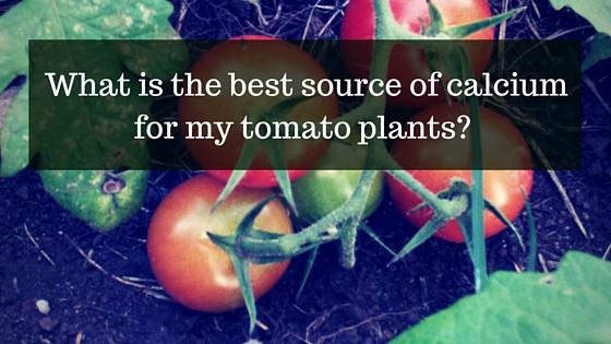 calcium for tomatoes