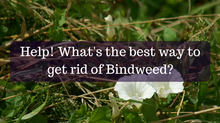 Ask A Gardener - Bindweed