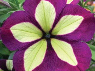 Five Amazing New Annuals from Hardy Boy