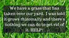 Ask A Gardener - Weed Grass
