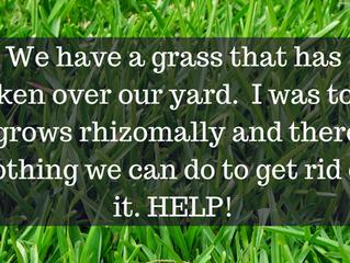 Ask A Gardener - Weed Grass