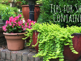 Made in the Shade: Tips for Shade Containers