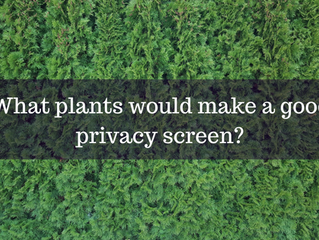 Ask a Gardener - Privacy Screens