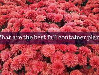 Ask A Gardener - Fall Container Plants