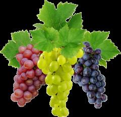 Картинки по запросу виноград ягода