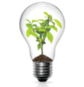 light bulb with a plant