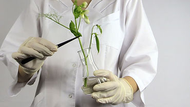 plant in a lab