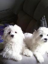 Miss Crafty's babies Francis Albert & Dino Paul <3