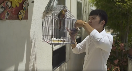 The parrot 2.png