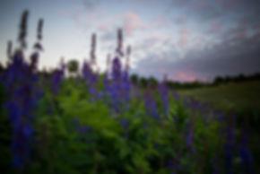 Eesti loodus