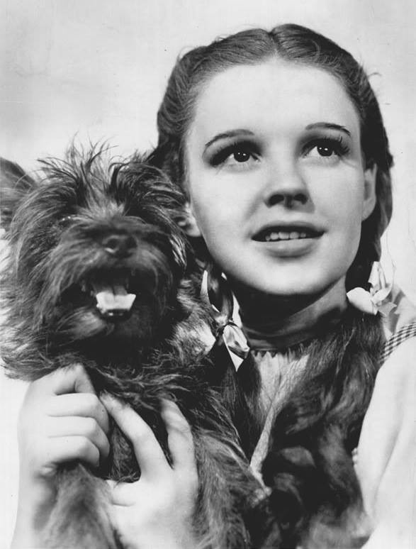 Girl holding small dog with both hands and both are looking past the person who has taken their picture
