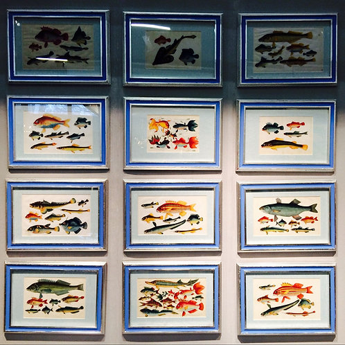 Set of 12 Chinese Rice Paper Paintings Of Fish - £7950