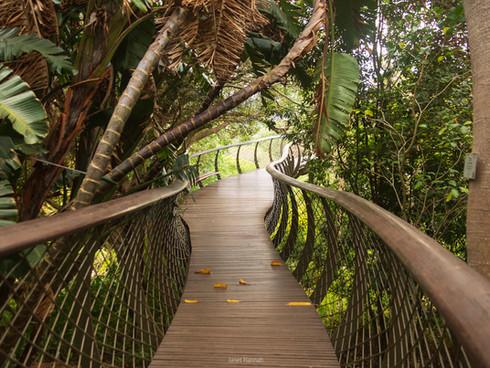 Tree canopy walkway at Kirstenbosch Botanical Gardens