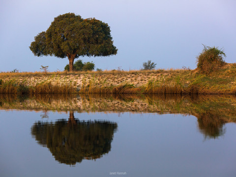 Chobe reflections
