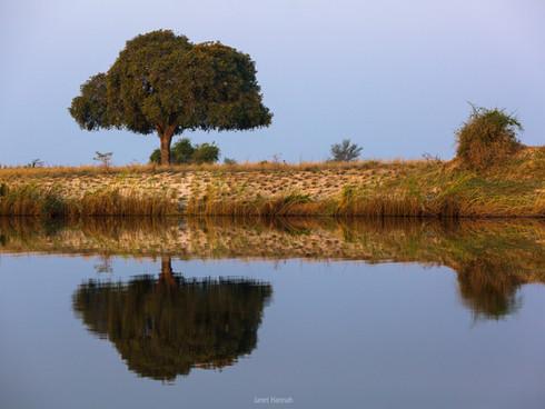 Chobe reflections