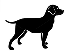 Vector image of an dog labrador by yod67