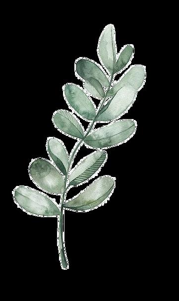 Watercolor Leaf for HerbaLine.png