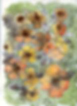 fleurs isa.jpg